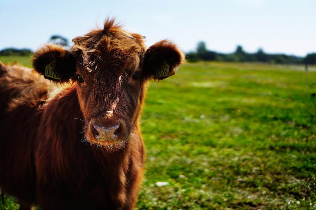 Beste veganist/vegetariër, je zit fout. Sorry.